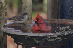 cardinal & sparrow