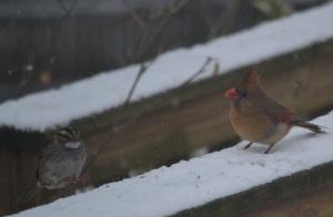cardinal & sparrow 2