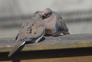 love doves 2