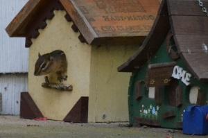 chippy in birdhouse 8
