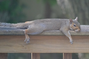 hot squirrel (1280x853)
