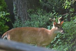 buck 2 (1280x856)