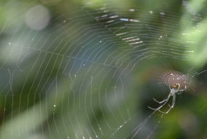 spider in web 3